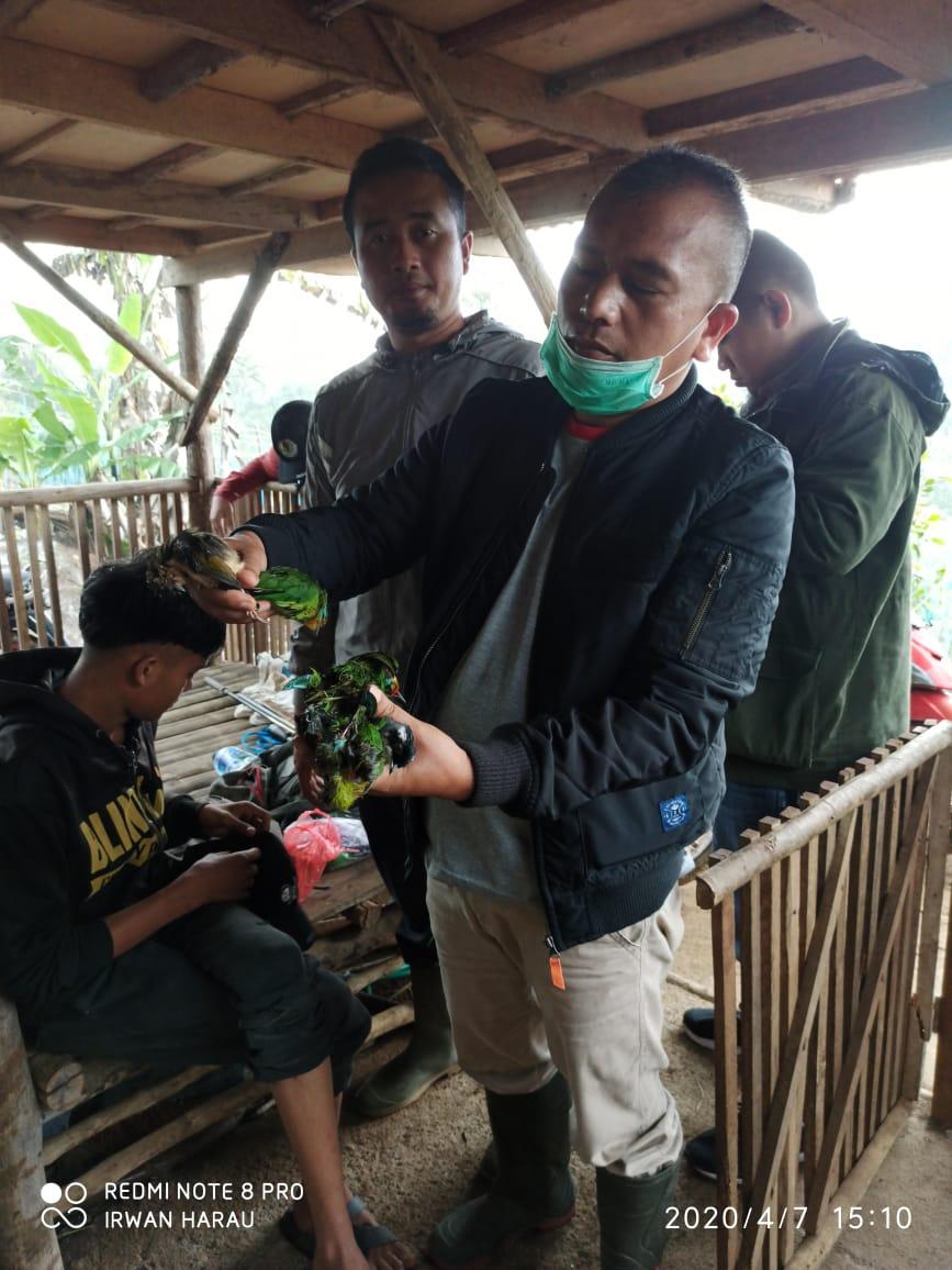 BKSDA Sumbar berhasil mengamankan pemburu burung dalam Kawasan TWA. Gunung Sago Malintang